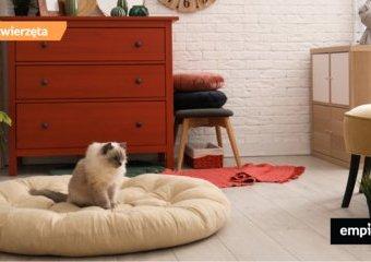7 dizajnerskich gadżetów dla kota, które upiększą wnętrze