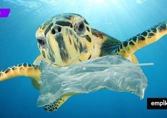 7 zasad życia zero waste