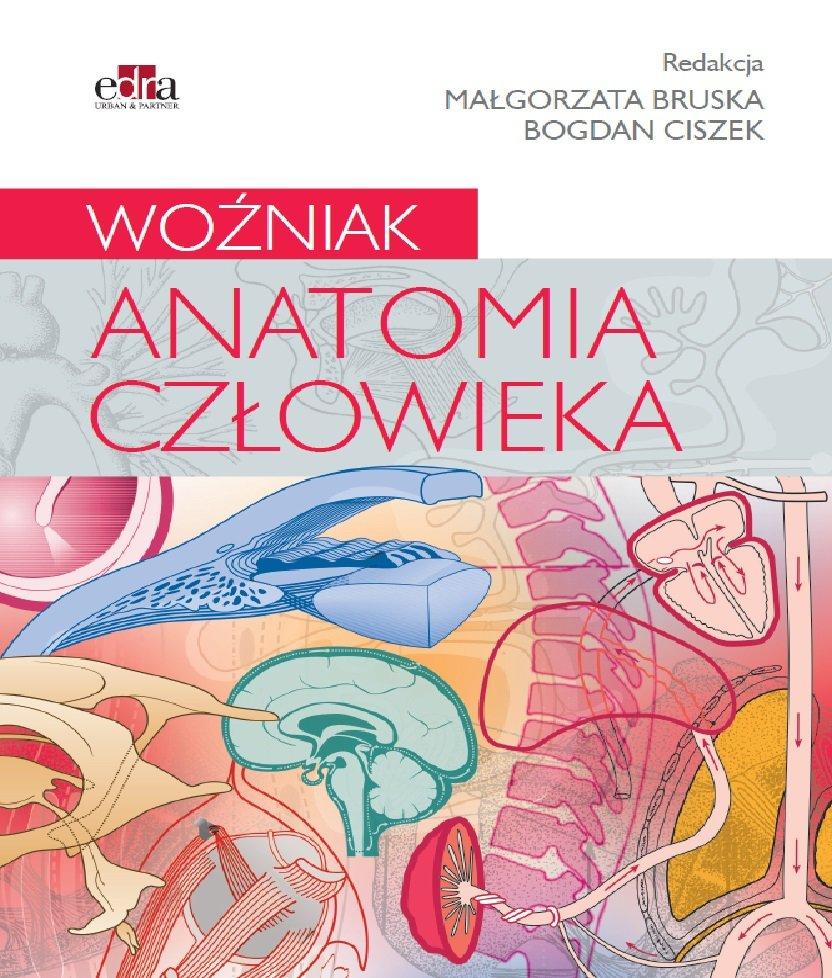 Anatomia Czlowieka Opracowanie Zbiorowe Ksiazka W Sklepie Empik Com