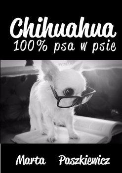 Chihuahua 100% psa w psie, Marta Paszkiewicz