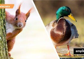 Co w parku piszczy – kaczki, wiewiórki i inne stworzenia, które możemy spotkać podczas spaceru