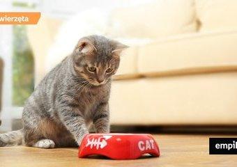 Dieta dla kota
