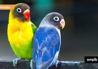 Egzotyczne papugi – co warto wiedzieć o tych ptakach? Jak hodować je w domu?