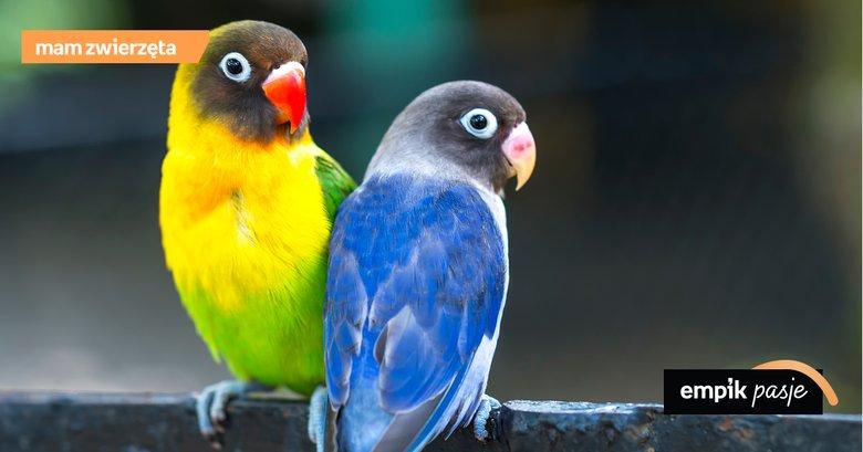 Egzotyczne Papugi Co Warto Wiedzieć O Tych Ptakach Jak