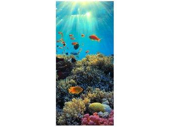 Fototapeta, Rafa koralowa, 1 elementów, 95x205 cm-Oobrazy