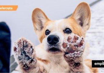 Gdy śnieg gryzie w łapy - jak zabezpieczyć psie łapki przed mrozem i solą?