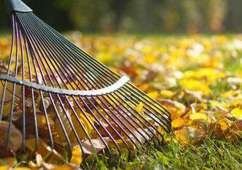 Grabie: jakie do liści, a jakie do trawy? Polecane grabie do ogrodu