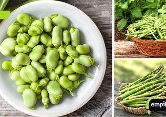 Gram w zielone, czyli czerwcowe warzywa na talerzu