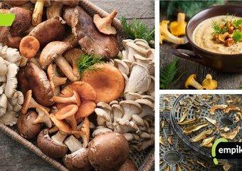 Grzybobranie! Jak suszyć, marynować, smażyć i gotować grzyby?