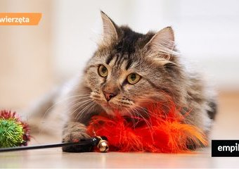 Jak bawić się z kotem? 8 pomysłów na zabawę