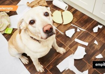 Jak przyzwyczaić psa do nieobecności opiekuna?