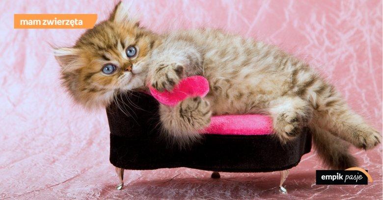 e624dce568642e Widok kota śpiącego na pralce, telewizorze, czy pod lampą na biurku nikogo  nie powinien dziwić. Koty potrafią zasnąć w każdym miejscu, ...