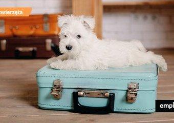 Jak zorganizować opiekę nad psem na czas urlopu?