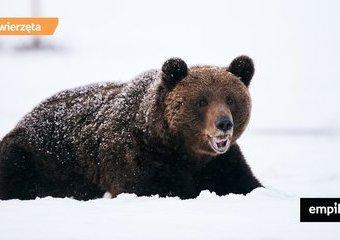 Jak zwierzęta przygotowują się do zimowego snu i nadchodzących chłodów?