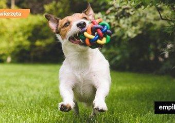 Jakie zabawki dla niszczącego psa?