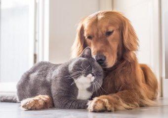 Jesteś posiadaczem kota lub psa? Nie zapomnij o jego codziennej pielęgnacji!