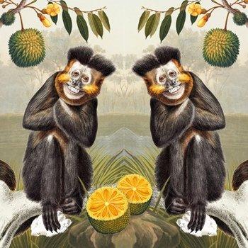 Karnet okolicznościowy, Capuchin Monkey-Museums & Galleries