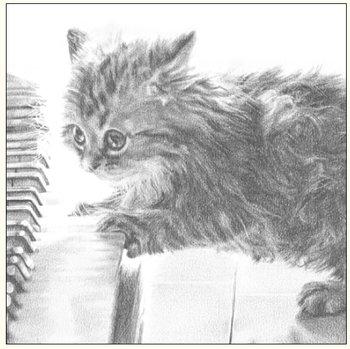 Karnet okolicznościowy, kot na pianinie szkic-DaVinci