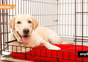 Klatka lub kojec dla psa – za czy przeciw?