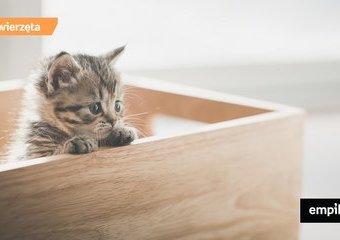 Kocia wyprawka – jak przygotować dom na kota?