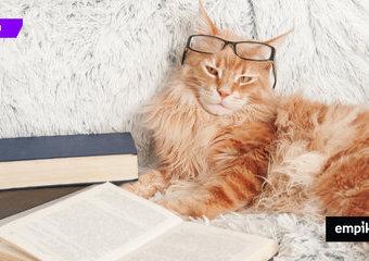 Książki, które czytałby twój kot
