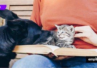 Książki na prezent dla miłośników psów i kotów