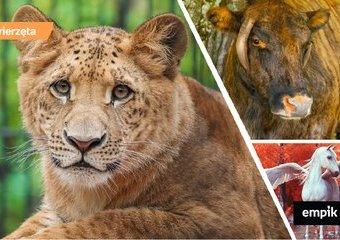 Legrys, Tyglew i Zebryna – o nietypowych krzyżówkach zwierząt