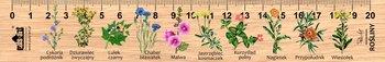 Linijka drewniana, rośliny, 20 cm