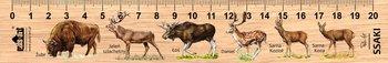 Linijka drewniana, ssaki duże, 20 cm