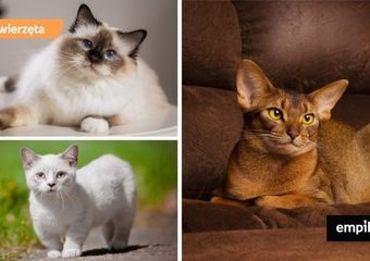 Miniaturowe koty