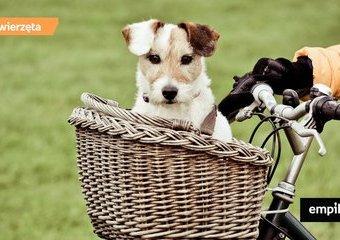 Na rower z psem – jak rozpocząć wspólną przygodę?