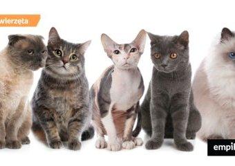 Najpopularniejsze rasy kotów