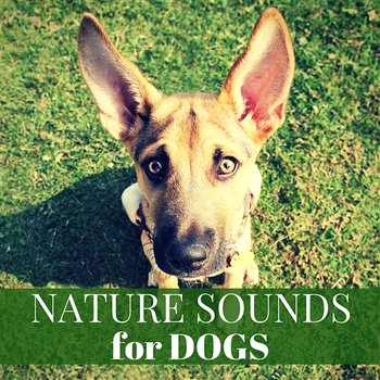 Nature Sounds for Dogs – Relaxing Background Music for Loneliness, Deep  Sleep, Anti Stress and Anxiety Instrumental for Pets (Album mp3)