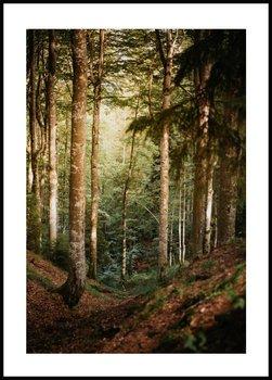 Nowoczesny Obraz Plakat A4 21x30 cm Droga do Lasu / Fabryka Plakatu -Fabryka plakatu