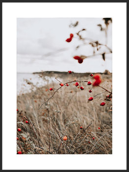Nowoczesny Obraz Plakat B2 FABRYKA PLAKATU Dzika róża, 50x70 cm-Fabryka plakatu