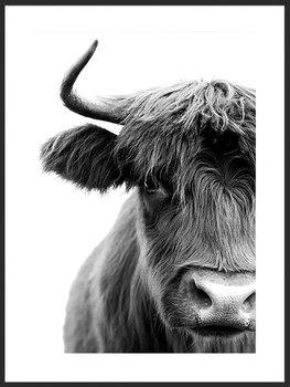 Nowoczesny plakat FABRYKA PLAKATU Krowa Szkocka A2, 42x60 cm-Fabryka plakatu