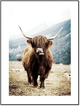 Nowoczesny plakat FABRYKA PLAKATU Krowa Szkocka B2, 50x70 cm-Fabryka plakatu
