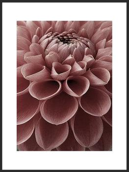 Nowoczesny plakat FABRYKA PLAKATU Kwiat Dalia A4, 21x30 cm-Fabryka plakatu