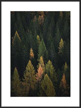 Nowoczesny plakat FABRYKA PLAKATU Las B2, 50x70 cm-Fabryka plakatu