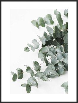 Nowoczesny plakat FABRYKA PLAKATU Listki Eukaliptusa B2, 50x70 cm-Fabryka plakatu