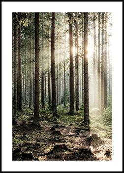 Nowoczesny plakat FABRYKA PLAKATU O Świcie w Lesie A4, 21x30 cm-Fabryka plakatu