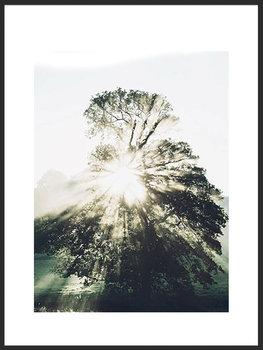 Nowoczesny plakat FABRYKA PLAKATU Samotne Drzewo B2, 50x70 cm-Fabryka plakatu