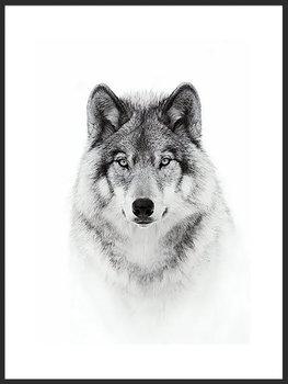 Nowoczesny plakat FABRYKA PLAKATU Wilk B1, 70x100 cm-Fabryka plakatu