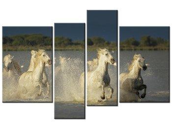 Obraz Białe dzikie konie, 4 elementy, 130x85 cm-Oobrazy