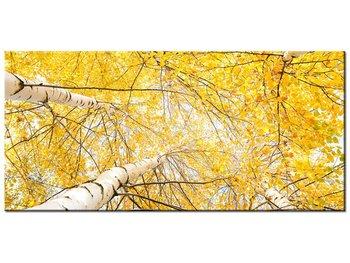 Obraz Brzoza, 115x55 cm-Oobrazy