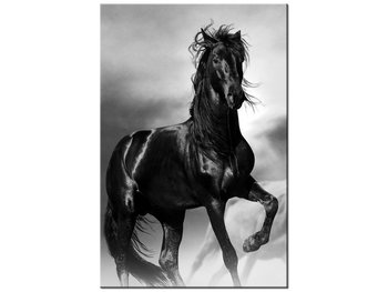 Obraz Czarny koń, 20x30 cm-Oobrazy