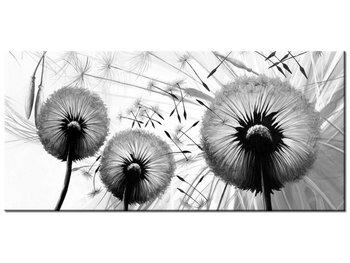 Obraz, Dmuchawce w szarościach, 115x55 cm-Oobrazy