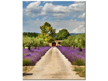 Obraz, Droga w Prowansji, 40x50 cm-Oobrazy