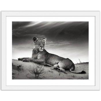 Obraz FEEBY Odpoczywająca lwica, 100x70 cm-Feeby