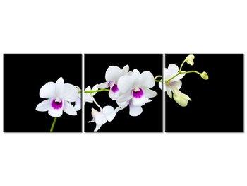 Obraz Gałązka storczyka, 3 elementy, 90x30 cm-Oobrazy